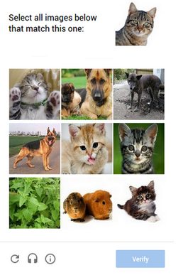 A collage of a cat and a dog  Description automatically generated with medium confidence
